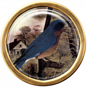 Ephemera Bird Brad 02