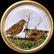 Ephemera Bird Brad 03