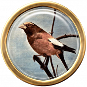 Ephemera Bird Brad 07