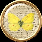 Butterfly Brad 6