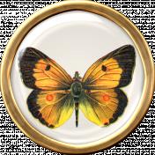 Butterfly Brad 5