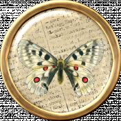 Butterfly Brad 7