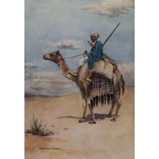 Egypt Illustration- Camel