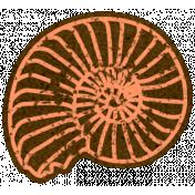 Oceanside Orange Shell