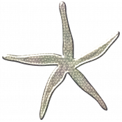 Coastal Starfish- Metal