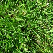 Real Textures 069- Grass