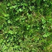 Real Textures 075- Grass