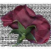 Flower 051