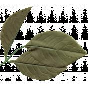 Leaf 008