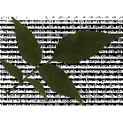 Leaf Cluster- Snowshoes