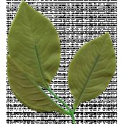 Bolivia Leaf