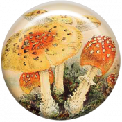 Autumn Art Brad- Mushrooms