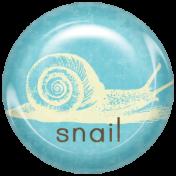 Animal Brad- Snail