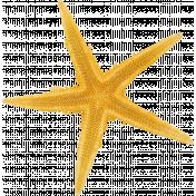 Sand And Beach- Starfish 1