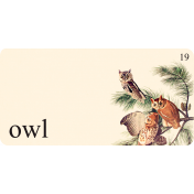 Cast A Spell Elements- Owl Flashcard