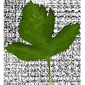 Autumn Pieces- Leaf 10