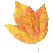 It's Elementary, My Dear- Leaf 2