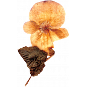 Pressed Flower 03