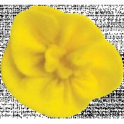 Yellow Felt Flower 03