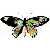 The Lucky One- Rainbow Butterfly