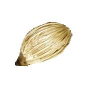 Earth Day Mini- Seed 1