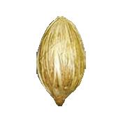 Earth Day Mini- Seed 2