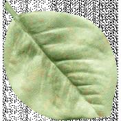 Oh Baby Green Silk Leaf