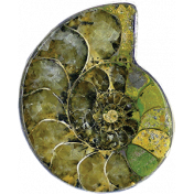 Pond Life- Ammonit