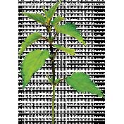 Pond Life- Branch