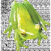 Pond Life- Real Frog