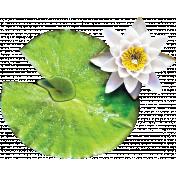 Pond Life- Lilypad