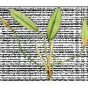 Pond Life- Plant 1