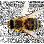 Garden Party - Bee