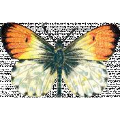 Garden Party- Orange Butterfly 2