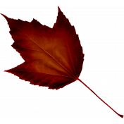Crisp Fall Air Leaf 05