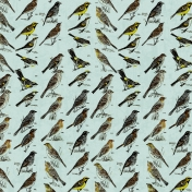 Bird Paper 81