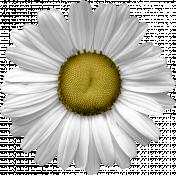 Genevieve Kit: Daisy