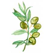 Sow & Reap Watercolor Olive Branch