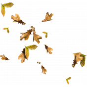 Autumn Leaf Scatter