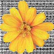 Honey Bee Painted Flower 02