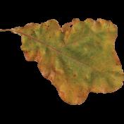 delish Mini Kit Leaf (01)