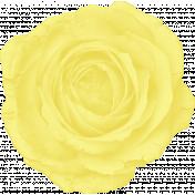 MEADOW LARK PAPER ROSE
