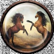 DANCING HORSES BRAD