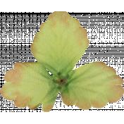 Silk Leaves 2