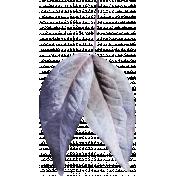Blue and lilac leaf