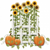 Sunflowers and Pumpkins 2