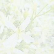 Flower Background- Autumn Clematis 2