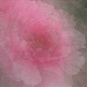 Peony in Pink Paper