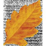Spookalicious- Orange Leaf
