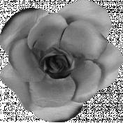 Shine- Paper Rose Template